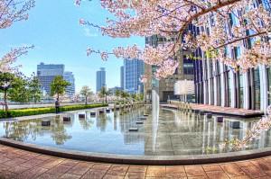 大阪中之島合同庁舎のさくら
