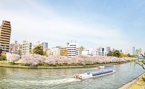 天神橋あたりの桜