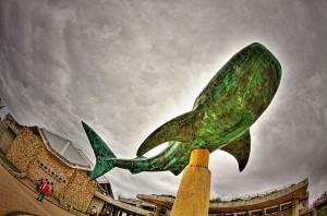ちゅら海水族館 食事中のジンベイサメ