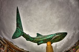ちゅら海水族館 吸い込むジンベイサメ