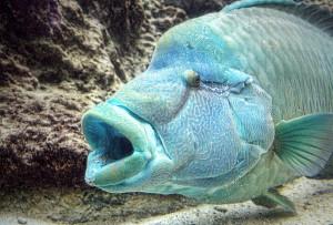 ちゅら海水族館 マンタやサメなど