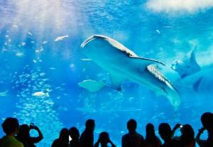 ちゅら海水族館 ジンベエザメのモニュメント
