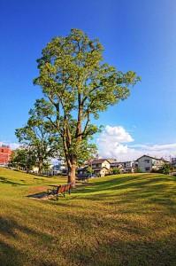 倉敷みらい公園 ベンチ
