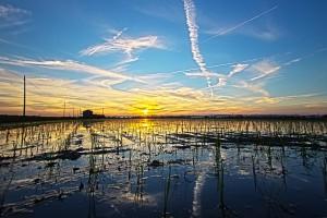 POLDER@4thトライ!澱んだ水田に反射する苗と夕日!