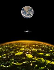 月はレンコンの巨大産地@Polder2