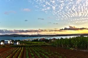 サトウキビ畑と古宇利大橋@ツール・ド・おきなわ2015でHDR