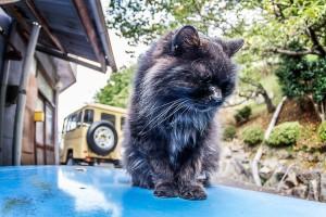コース脇の猫ちゃんは、カメラで近寄っても逃げません!慣れてるわー!@Red Bull Holy Ride