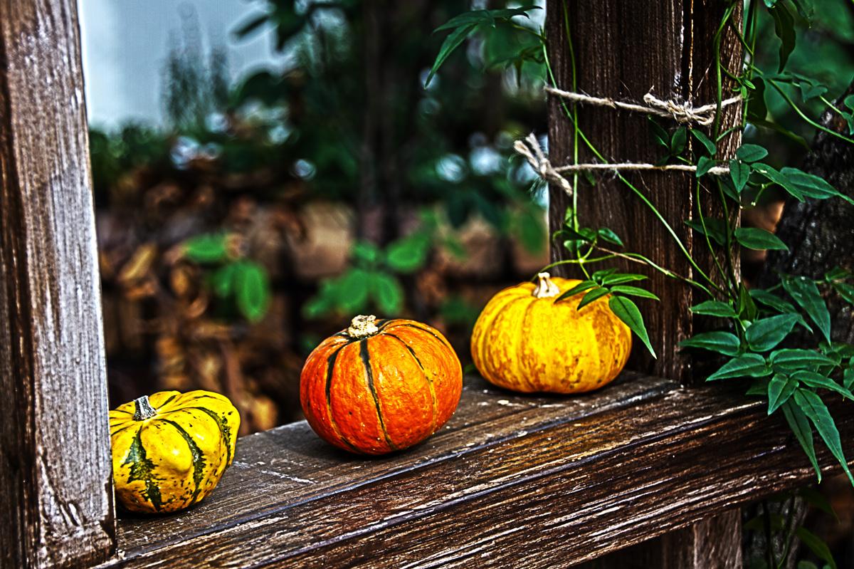 グラスハウスにあったかぼちゃ