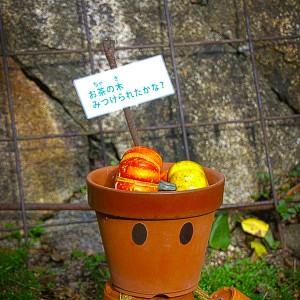 神戸布引ハーブ園のかわいい鉢人形、その1@神戸布引HerbGardens