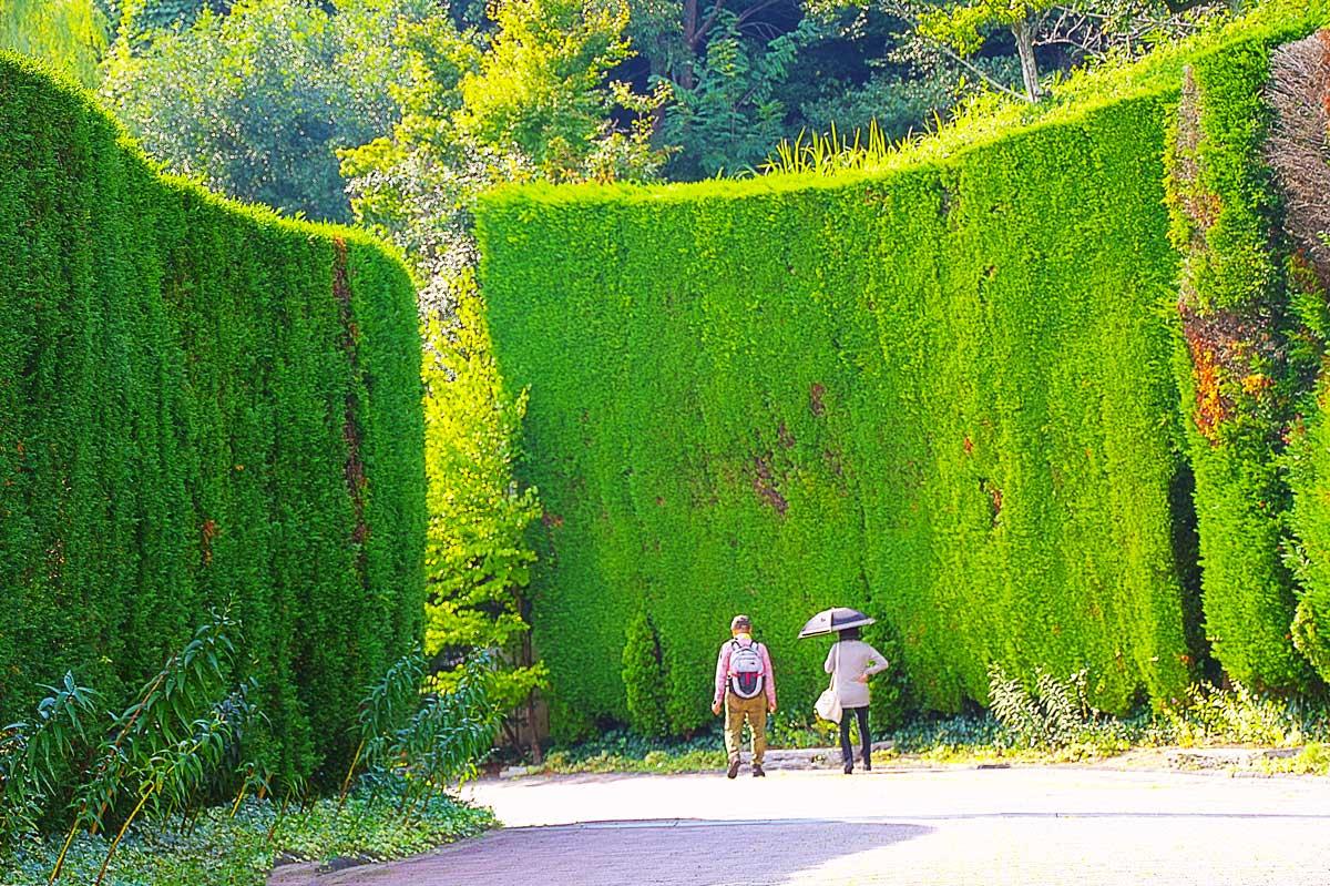 風の丘中間駅の緑の壁
