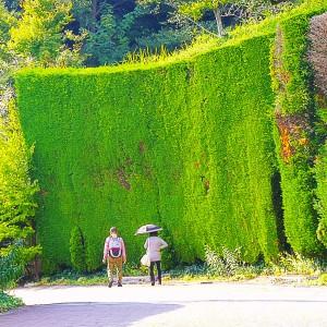 緑の壁を通って下山していく老夫婦@神戸布引HerbGardens