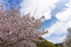 桜と雲(獲得標高4100mきつすぎる!)@SkyCollection