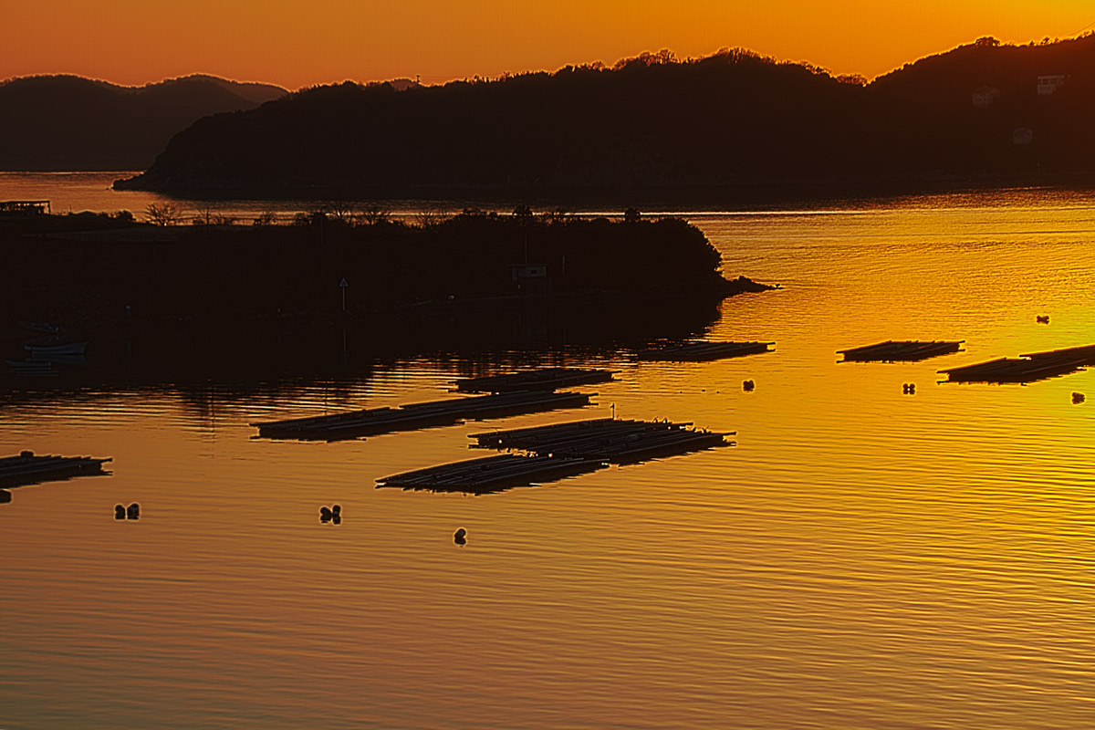 日生湾の牡蠣筏