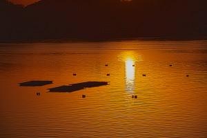 海に映った夕日と牡蠣筏@HINASE