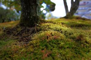 苔に、できるだけ寄ってみた@福山城公園