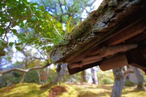 屋根のコケ@福山城公園