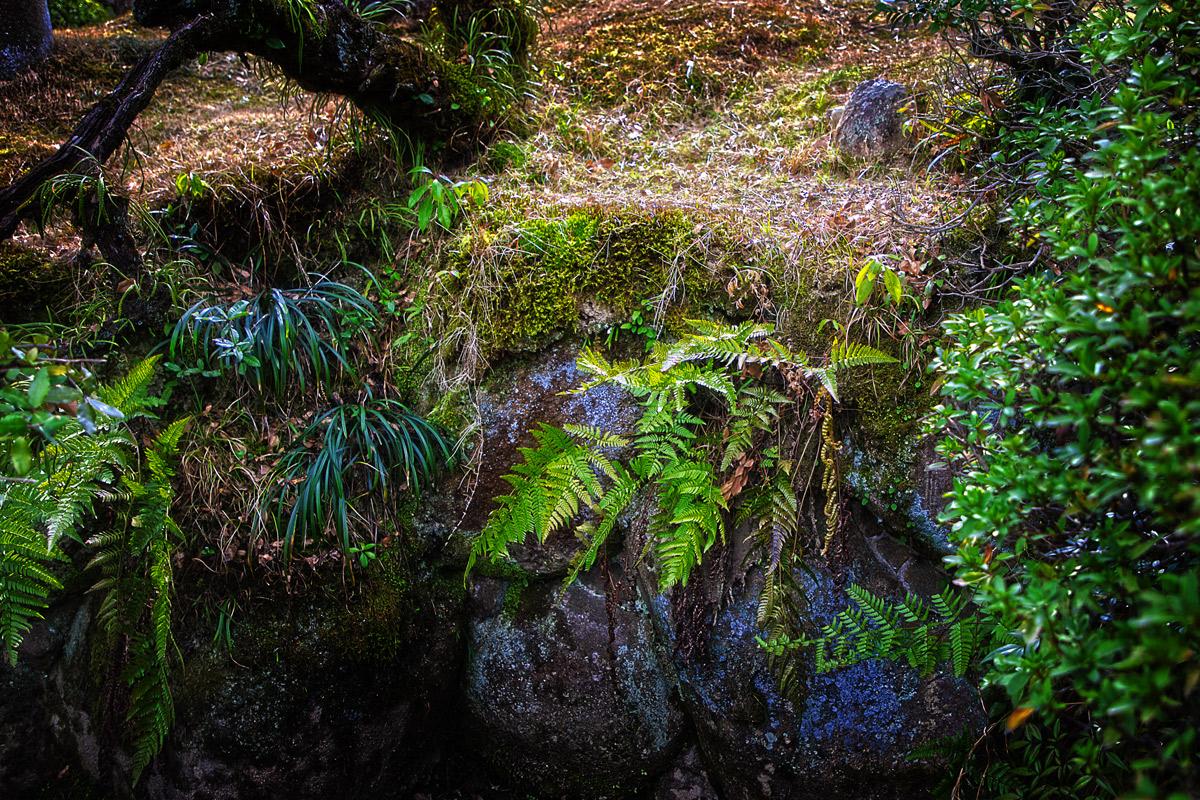 池の石のシダ